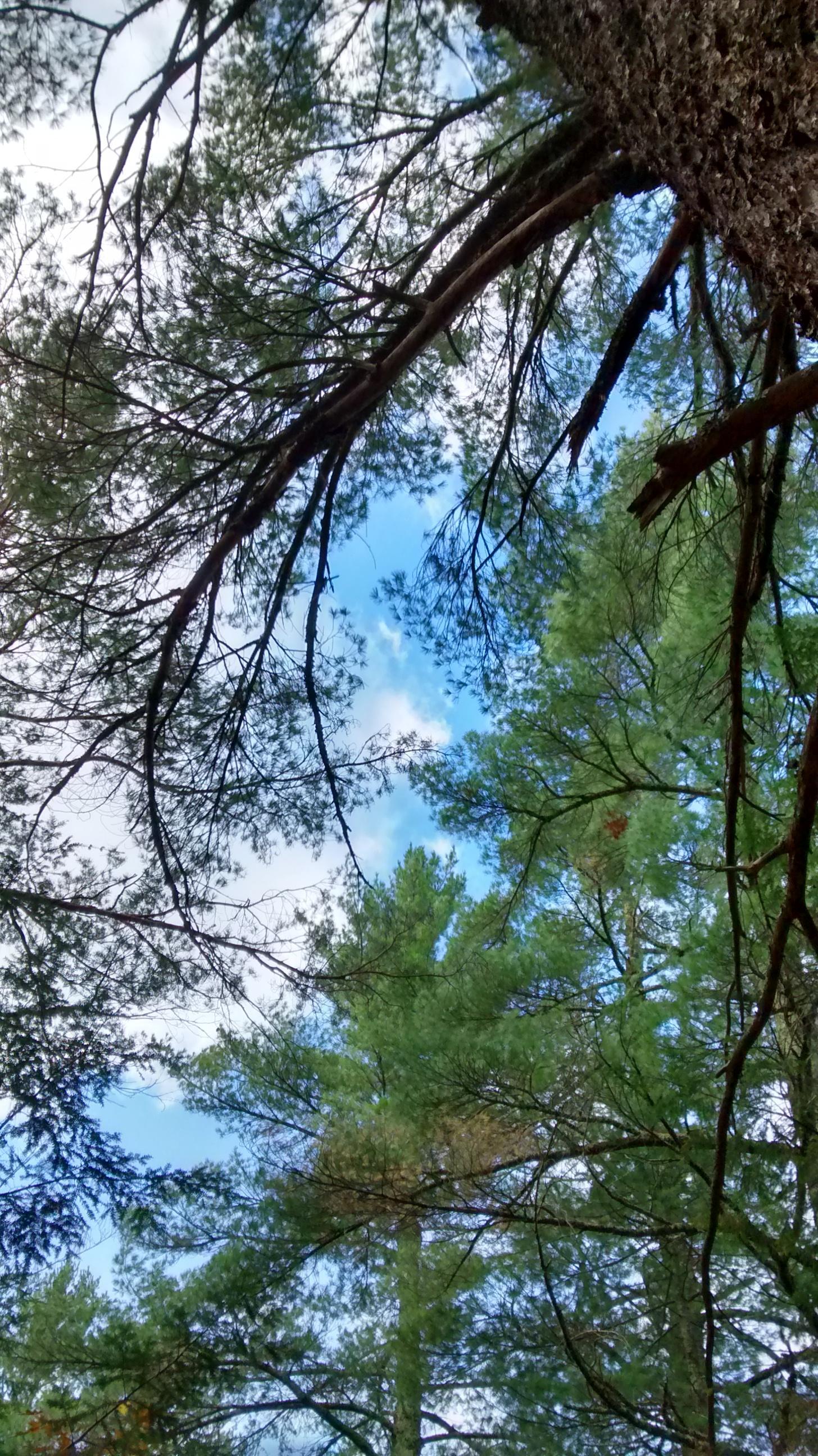 pines at Copper Falls, WI